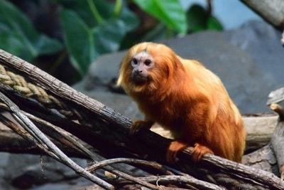 A monkey sitting on a branch