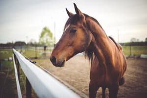 Horse. Yorba Linda Car Title Loans